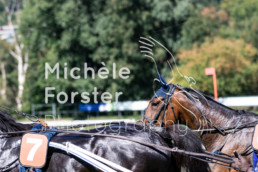 2018_09_09 Aarau 034 - Michèle Forster Photography