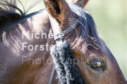 2018_10_07 Maienfeld 003 - Michèle Forster Photography