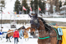 2019_02_10 St. Moritz 011 - Michèle Forster Photography