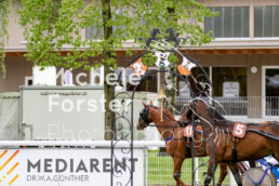 2019_05_05 Dielsdorf 004 - Michèle Forster Photography