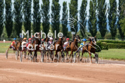 2019_07_13 Avenches 004 - Michèle Forster Photography