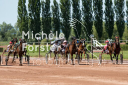 2019_07_13 Avenches 017 - Michèle Forster Photography