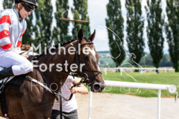2019_07_13 Avenches 059 - Michèle Forster Photography