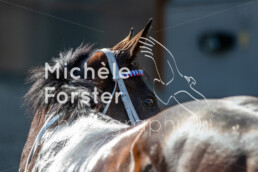 2019_08_08 Avenches 051 - Michèle Forster Photography