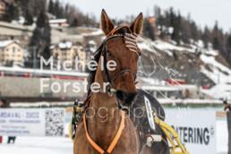 2020_02_02 St. Moritz 0007 - Michèle Forster Photography