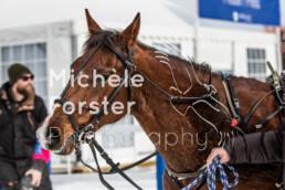 2020_02_02 St. Moritz 0119 - Michèle Forster Photography