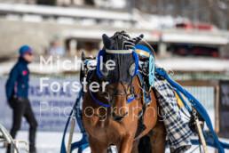 2020_02_09 St. Moritz 0010 - Michèle Forster Photography