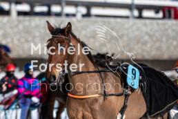 2020_02_09 St. Moritz 0014 - Michèle Forster Photography