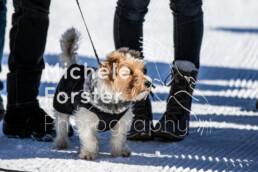 2020_02_09 St. Moritz 0119 - Michèle Forster Photography