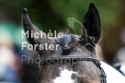 2020_09_27_Dielsdorf_MForsterPhotography_0032 - Michèle Forster Photography