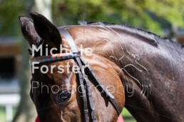 2021_05_06_Dielsdorf_MForsterPhotography_0037 - Michèle Forster Photography