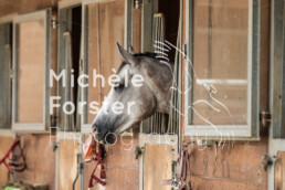 2021_08_21_Dielsdorf_MForsterPhotography_0060 - Michèle Forster Photography